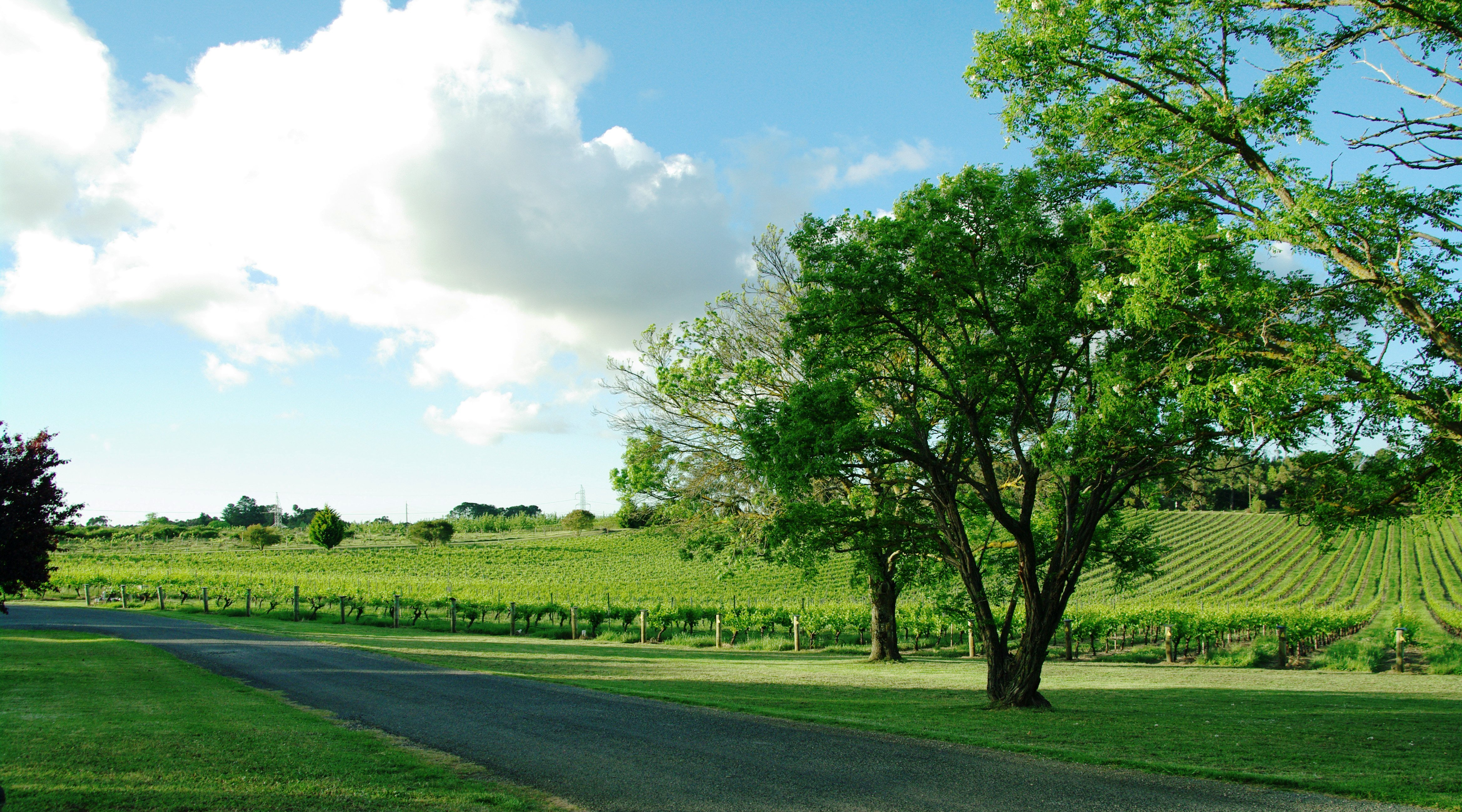 Paracombe Vineyards
