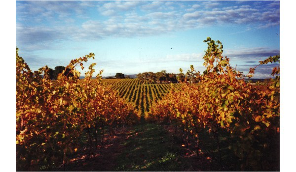 Discover Paracombe Wines