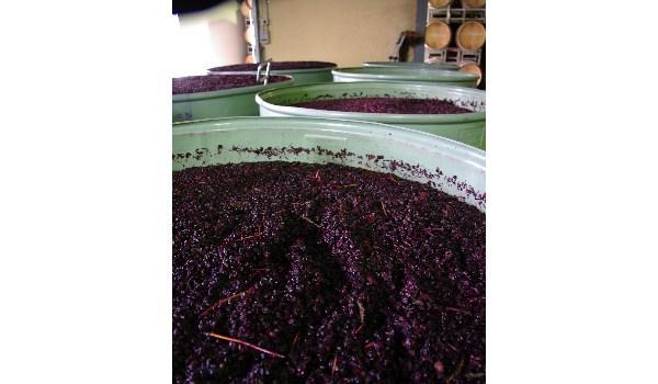Open ferments